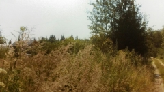 СНТ, Симферопольское ш. 69 км от МКАД, Серпуховский р-н, Шараповское лесничество, садовое товарищество, от ж/д ст. Шарапова охота 25 мин/пешком, участок 6 соток, в собственности, с межеванием, свет по границе, вода, водоем, вокруг лес. Хороший подъезд со