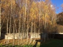 ИЖС, 25 км от МКАД, Калужское шоссе, новая Москва, д. Романцево, коттедж  дом 160 кв.м., на участке 6 соток, крайний к лесу в охраняемом поселке, в окружении реликтового леса.  Стены газоблок, утеплен и оштукатурен декоративной штукатуркой с элементами де